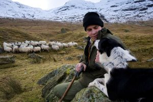 The Shepherd and the Wild Sheep